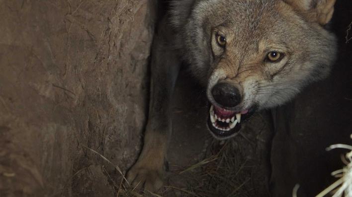 A Hora do Lobo