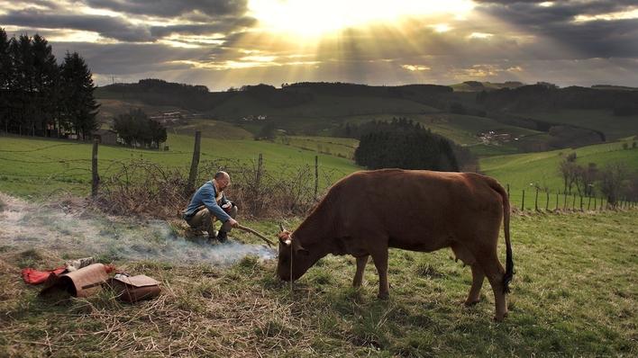 A Minha Vaca é Uma Estrela