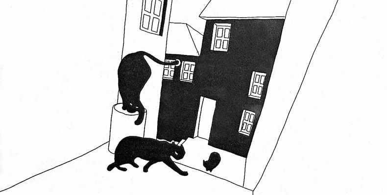 Estória Do Gato E Da Lua