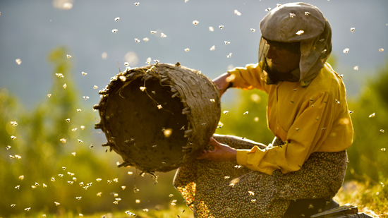 Honeyland - A Terra Do Mel